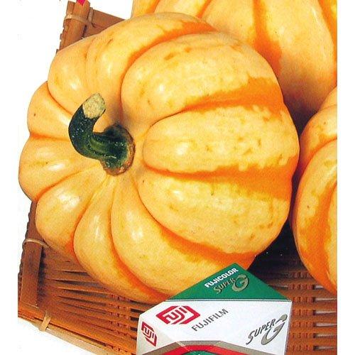 かぼちゃ 種 【 プッチィーニ 】 種子 小袋(約7粒)