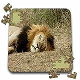 Angelique Cajam Big Cat Safari - South African Sleeping Lion headshot - 10x10 Inch Puzzle (pzl_20105_2)
