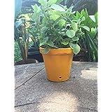 "The Garden Store 6""inch Pot"