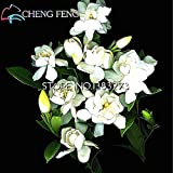 50 Particles A Pack White Gardenia Seeds Rare Flores Cape Jasmine Seeds Beautiful Flower Seed Easy To Sprout Planter...