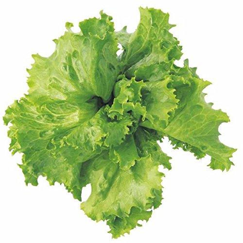 ユーイング Green Farm用種子(レタス) UH-LA01