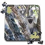 Angelique Cajam Safari Animals - South African Vervet Monkey in tree - 10x10 Inch Puzzle (pzl_20127_2)
