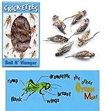 HotLix Edible Crickets (salt and vinegar flavor)