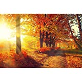 Pitaara Box Autumnal Trees In Sun Rays - MEDIUM Size 24.0 Inch X 16.0 Inch - UNFRAMED ARTISTIC CANVAS Wall Paintings...