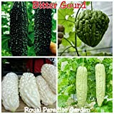 20 Seeds Rare Combo Bitter Gourd Vegetable Seeds 5 Seeds Each 4 Variety Seeds