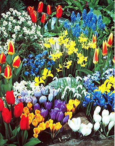 A Complete Spring Garden - 50 Bulbs