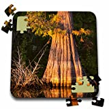 Danita Delimont - Alison Jones - Trees - USA, Louisiana, St Francisville. Bald cypress in water of Bayou Sara. - 10x10 Inch Puzzle (pzl_189356_2)