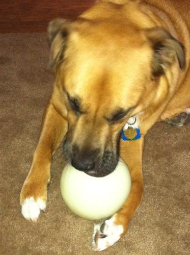 Pet Supplies : Pet Toy Balls : Planet Dog Orbee-Tuff