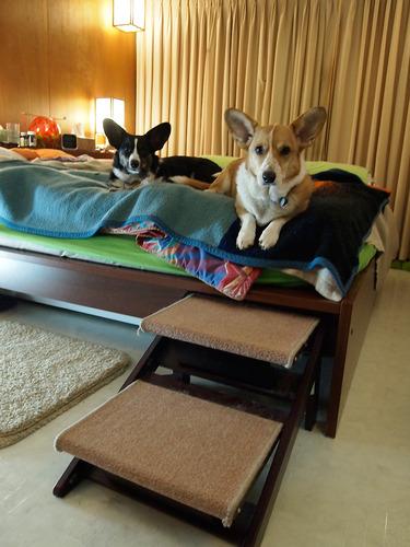 Amazon.com : Pet Studio Pine Frame Dog RampSteps, 3 Step