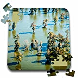 Danita Delimont - Alison Jones - Lakes - USA, Louisiana, Aerial of Atchafalaya Basin, Lake Martin, bald cypress - 10x10 Inch Puzzle (pzl_189354_2)