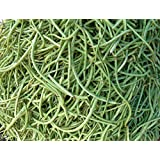 SEED Seller: Cowpea Vigna Unguiculata Seeds For Growing.Pod Length: 30cm. Color: Green. BGL: Fast Growing, High...