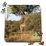 Angelique Cajam Safari Giraffes - South African Giraffe full body view - 10x10 Inch Puzzle (pzl_20125_2)