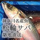 松輪サバ 神奈川県産 トップブランド鯖 活け 鮮魚(築地直送)600-700g/尾 最高級鮮魚