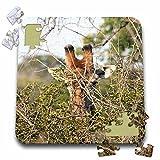 Angelique Cajam Safari Giraffes - South African Giraffe head face in the trees - 10x10 Inch Puzzle (pzl_20121_2)