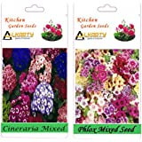 Alkarty Cineraria And Phlox Mixed Seeds Pack Of 20 (Winter)