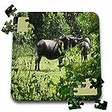 Angelique Cajams Safari Buffalos - Buffalos Thailand - 10x10 Inch Puzzle (pzl_26800_2)