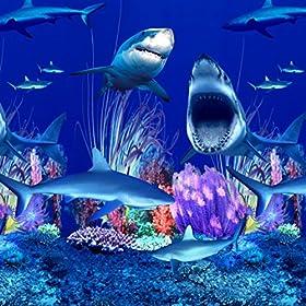 Shark Nation Overlap
