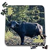 Angelique Cajam Safari Buffalos - South African Buffalo side view face view - 10x10 Inch Puzzle (pzl_20120_2)
