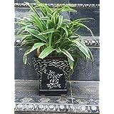 The Garden Store Ceramic Glazed Pot Black With Art Work