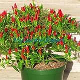 Heirloom 35pcs/lot Thai Sun Hot Pepper Capsicum Annuum Ornamental Chili Seeds Bonsai Plant Mini Hot Pepper Seeds