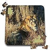 Angelique Cajam Big Cat Safari - Lion king in the grass - 10x10 Inch Puzzle (pzl_26828_2)