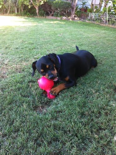 Pet Supplies : Pet Squeak Toys : JW Pet Company Ruffians