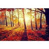 Pitaara Box Autumnal Trees In Sun Rays - MEDIUM Size 24.0 Inch X 16.0 Inch - UNFRAMED SELF-ADHESIVE PEEL & STICK...