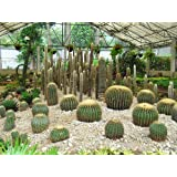 "Dolls Of India ""Cactus At Saramsa Garden, Gangtok - East Sikkim, India"" Photographic Print - Unframed (40.64 X..."