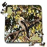 Angelique Cajams Safari Birds - South African Hornbill - 10x10 Inch Puzzle (pzl_26836_2)