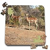 Angelique Cajams Safari Animals - Kruger Impalas passing - 10x10 Inch Puzzle (pzl_26843_2)