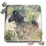 Angelique Cajam Safari Animals - South African Zebra in the grass - 10x10 Inch Puzzle (pzl_20131_2)