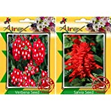 Airex Verbena And Salvia Flower Seeds ( Pack Of 30 Seeds Per Packet)