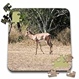 Angelique Cajam Safari Animals - South African Impala in a grassy plain standing up - 10x10 Inch Puzzle (pzl_20130_2)