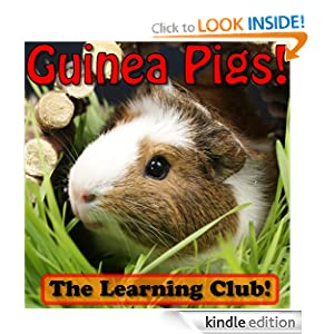 Guinea Pigs! Learn About Guinea Pigs And Learn To Read - The Learning Club! (45+ Photos of Guinea Pigs)