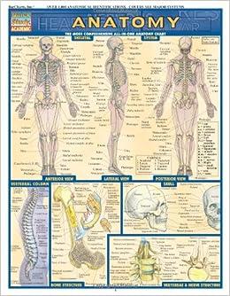 Printable Dermatome Chart