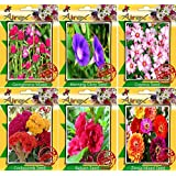 Airex Gomphrena Mixed,Morning Glory,Cosmos,Cockscomb Mixed,Balsam,Zinnia Mixed Seeds ( Pack Of 10 Seeds Per Packet)