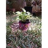 The Garden Store Tin Planter Small Pink