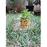 The Garden Store Tin Planter Large Yellow