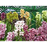 "Dolls Of India ""Orchids In Namgyal Memorial Park, Gangtok - East Sikkim, India"" Photographic Print - Unframed..."
