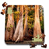 Danita Delimont - Alison Jones - Trees - USA, Louisiana, Atchafalaya Basin, Pierce Lake, bald cypress, sunrise - 10x10 Inch Puzzle (pzl_189357_2)