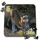 Angelique Cajam Big Cat Safari - South African Lioness Stretching - 10x10 Inch Puzzle (pzl_20110_2)