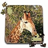 Angelique Cajam Safari Giraffes - South African Giraffe headface - 10x10 Inch Puzzle (pzl_20122_2)