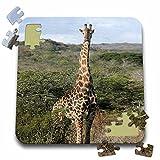 Angelique Cajam Safari Giraffes - South African Giraffe head to legs - 10x10 Inch Puzzle (pzl_20117_2)