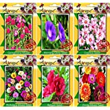 Airex Gomphrena Mixed,Morning Glory,Cosmos,Portulaca Mixed,Balsam,Zinnia Mixed Seeds ( Pack Of 10 Seeds Per Packet)