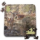 Angelique Cajams Safari Animals - Kruger Impalas up close - 10x10 Inch Puzzle (pzl_26844_2)