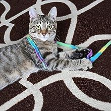 Cat Dancer - Cat Charmer Teaser Toy