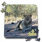 Angelique Cajam Big Cat Safari - Young lion in the grass - 10x10 Inch Puzzle (pzl_26832_2)