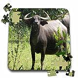 Angelique Cajams Safari Buffalos - Buffalos Thailand up close - 10x10 Inch Puzzle (pzl_26799_2)