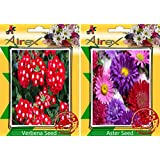 Airex Verbena And Aster Flower Seeds ( Pack Of 30 Seeds Per Packet)