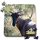 Angelique Cajam Safari Animals - South African Kudu - 10x10 Inch Puzzle (pzl_20111_2)